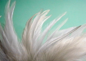 White Feathers for crafts (20)