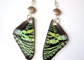 Sunset Moth Earrings, Real Wings