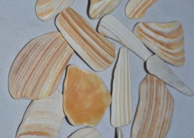 15 - Sea shell Pieces