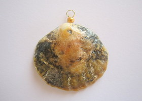 Beautiful Shell pendant - from Irish Sea