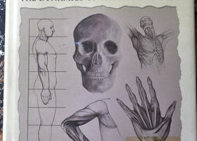 Anatomy for the Artist Book - by Tom Flint