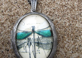 On the Wings of A Dragonfly Locket Necklace
