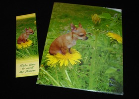"Chihuahua on Dandelion Fantasy Digital Print 8""x10"""